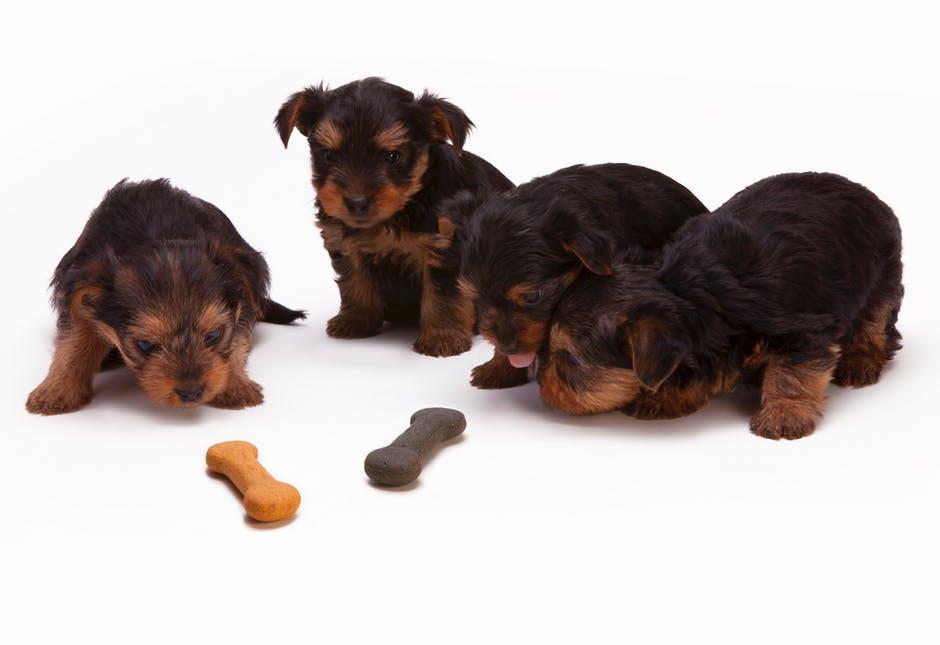 puppy wenbeurt trimsalon anne